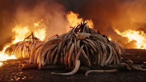 Anthropocene: The Human Epoch (2018)