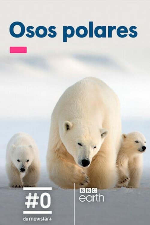 Imagen Osos polares