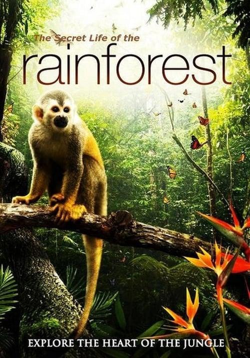 Assistir The Secret Life of the Rainforest Online