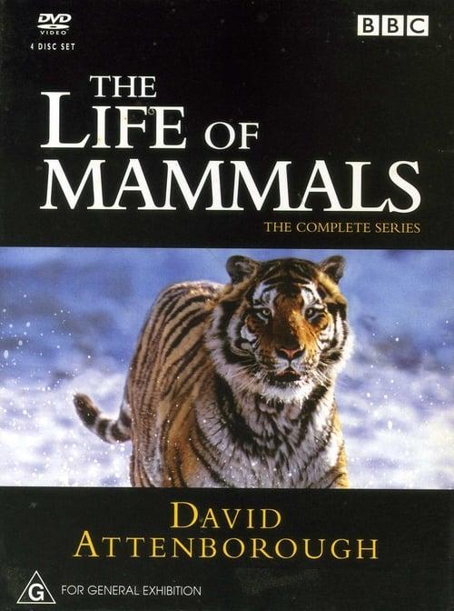 David Attenborough. The Life Of Mammals (1970)