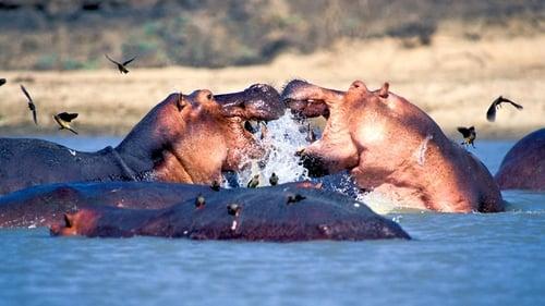 Natural World: 2011-2012 – Épisode Zambezi