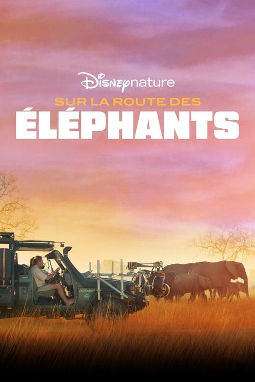 Sur la route des éléphants