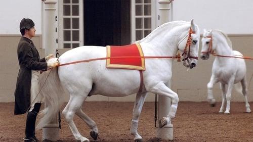 Nature 2013 720p Extended: Season 31 – Episode Legendary White Stallions