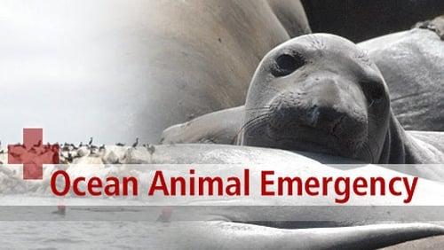 NOVA: Season 36 – Episode Ocean Animal Emergency