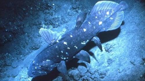 NOVA: Season 30 – Episode Ancient Creature of the Deep