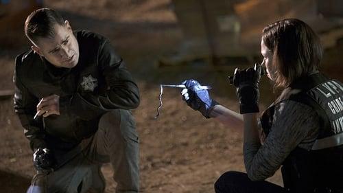 Assistir CSI: Investigação Criminal S15E14 – 15×14 – Dublado