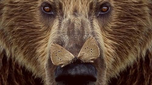 Ver pelicula Cantábrico: Los dominios del oso pardo Online