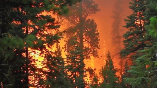Vetenskapens värld: Season 2019 – Episode The time of the forest fires
