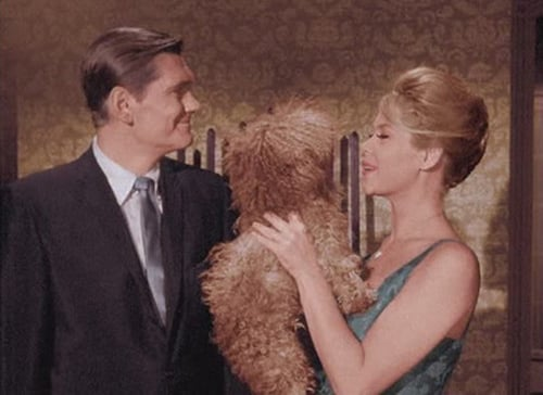 Bewitched: Season 1 – Épisode It Shouldn't Happen to a Dog