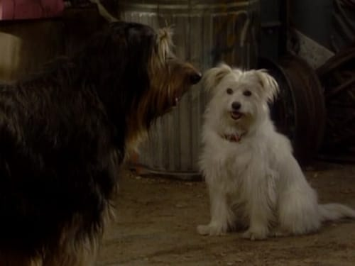 Married... with Children - Season 5 - Episode 14: Look Who's Barking