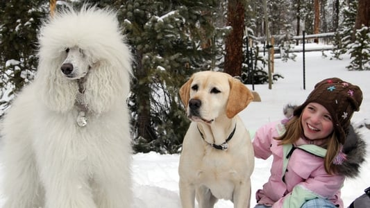 Ein Hund rettet Weihnachten on FREECABLE TV