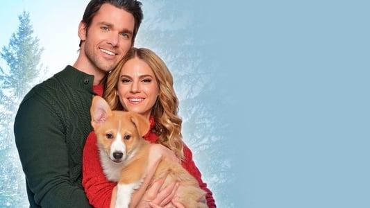 A Very Corgi Christmas on FREECABLE TV