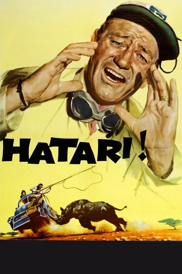 Hatari! - Poster