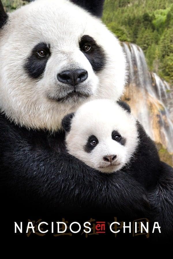Imagen Nacidos en China