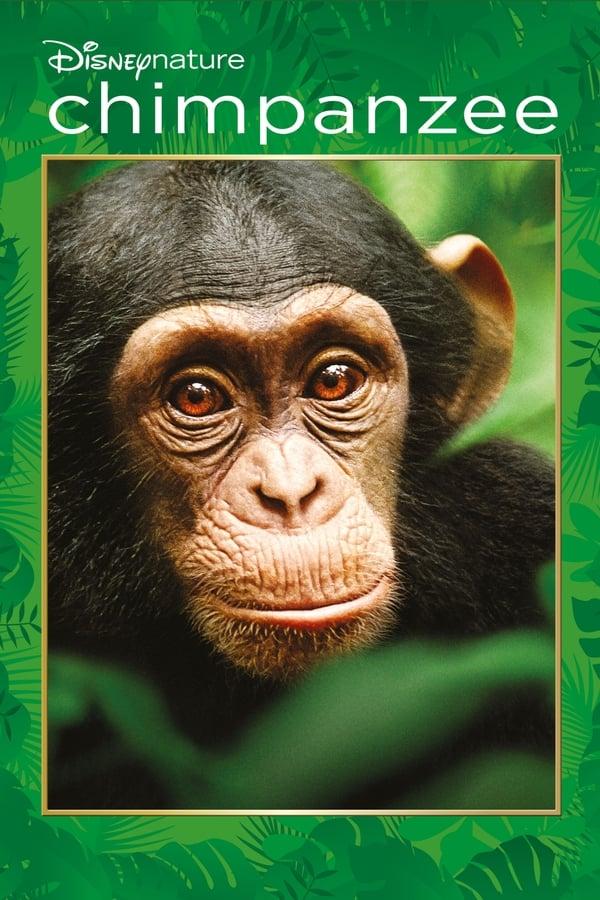 FR  Chimpanzee