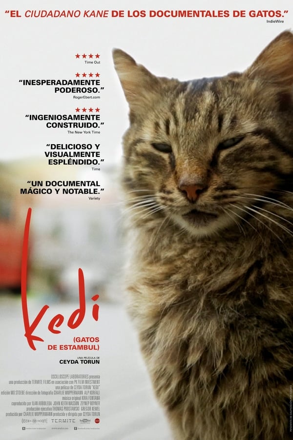 Kedi (Gatos de Estambul)