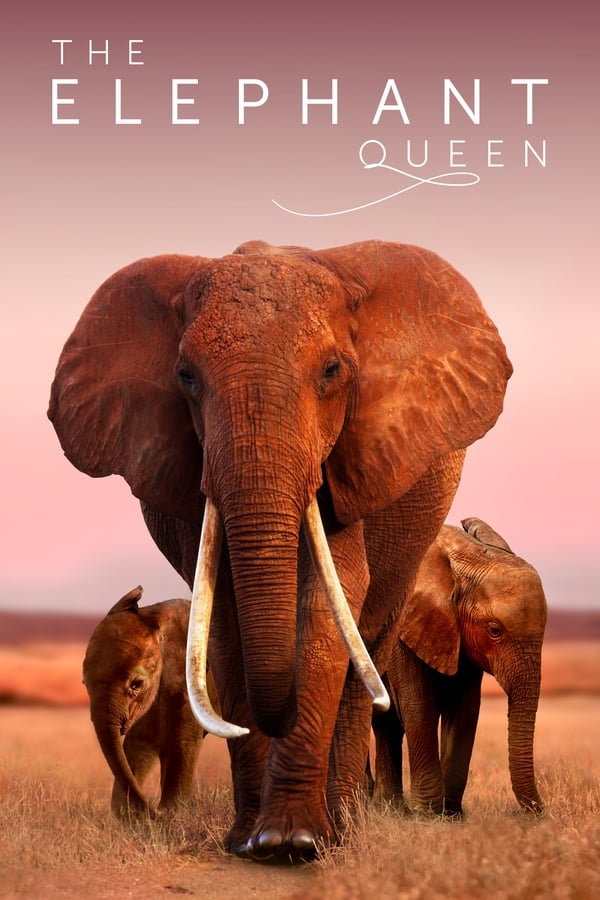 The Elephant Queen (2019) English [Documentary] 1080p | 720p | 480p | WEB-DL | 4.6GB, 750MB, 350MB | Apple TV+ Exclusive | Download | Watch Online | Direct Links | GDrive