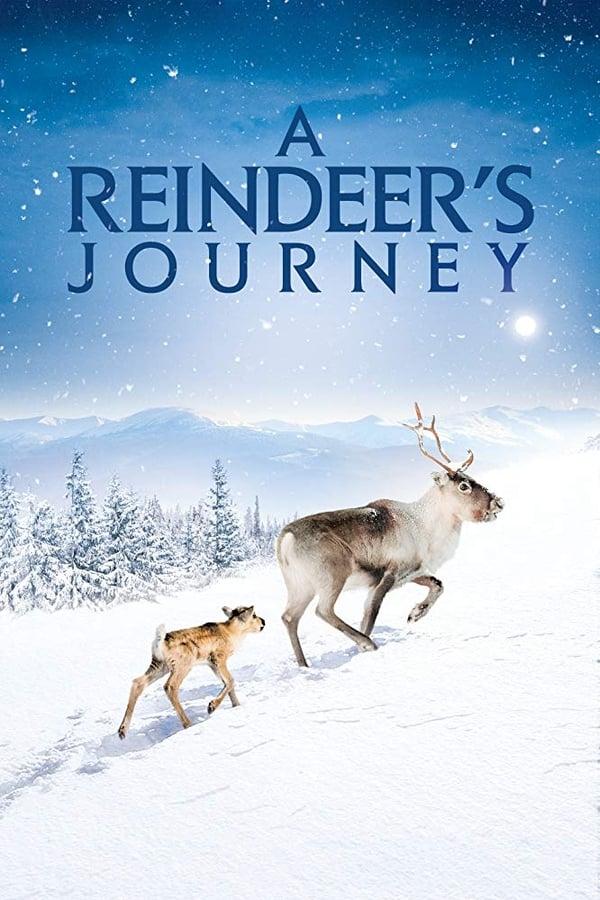 |FR| A Reindeer s Journey