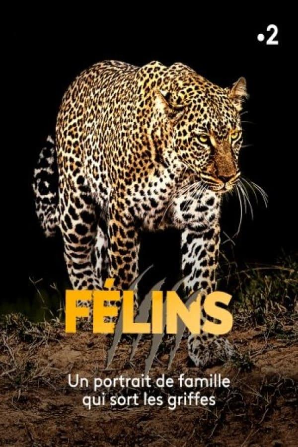 |FR| Felins