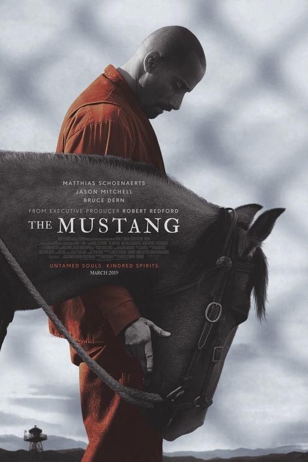Imagen Mustang: La Rehabilitación