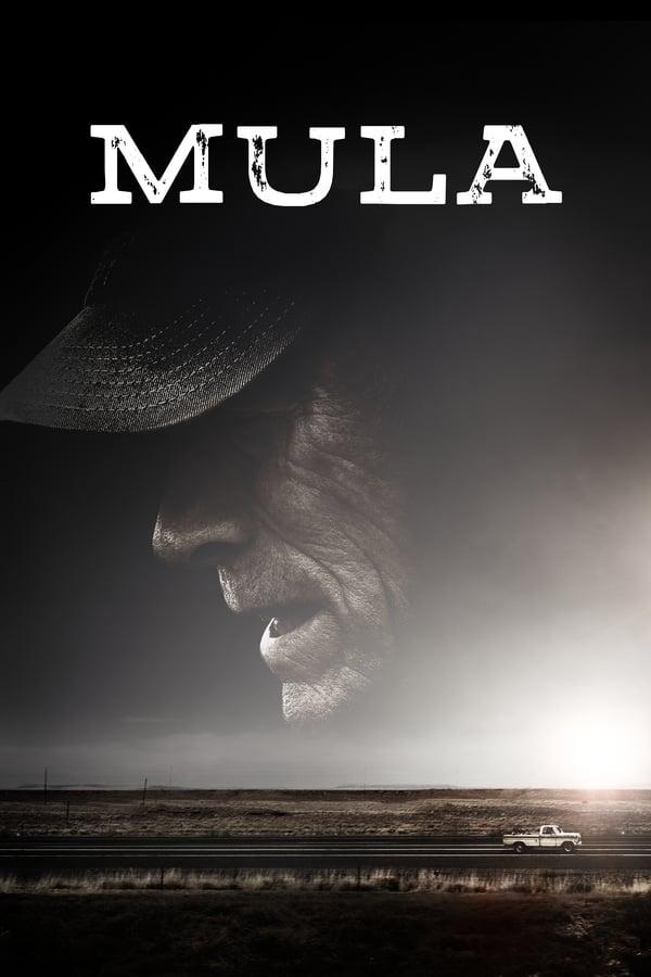Imagen Mula