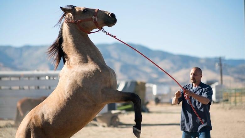 לאלף מוסטנג / The Mustang לצפייה ישירה
