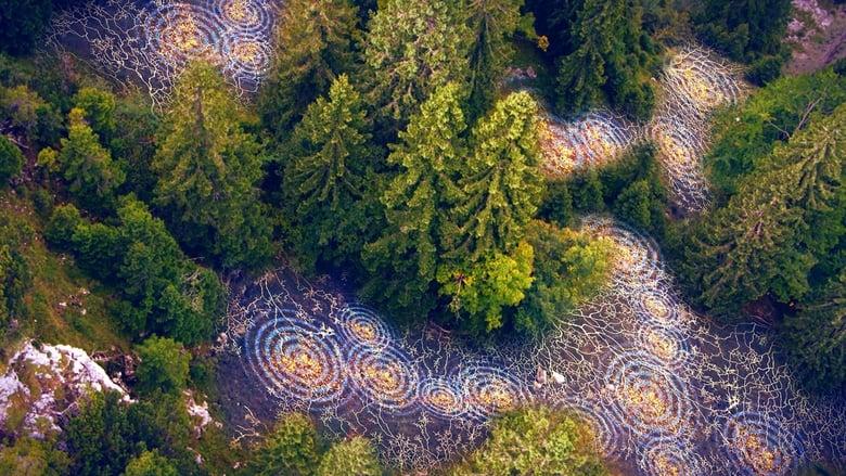 Terra X - Unsere Wälder (2017)