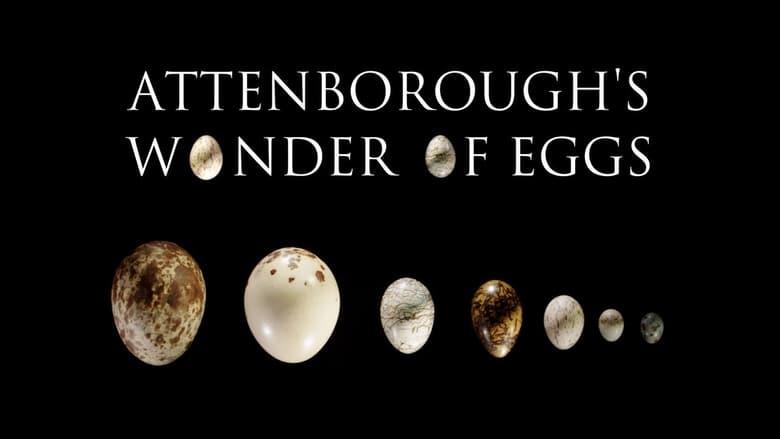 Attenborough's Wonder of Eggs