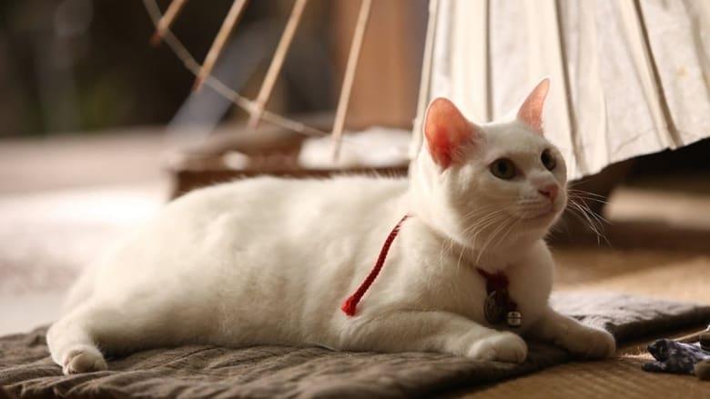 Samurai Cat (2013)