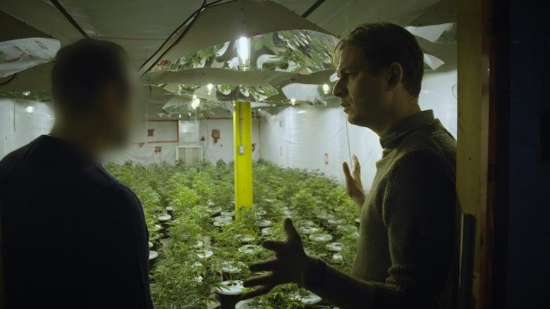 Cannabis illégal