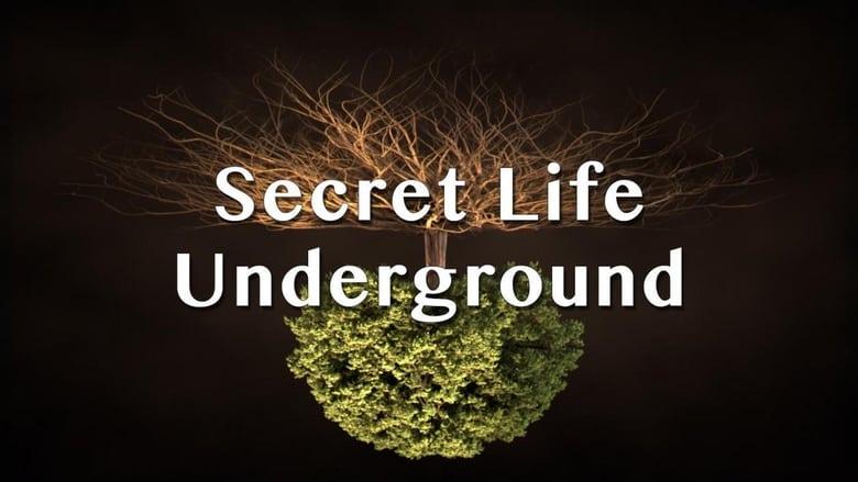 Secret Life Underground (2015)