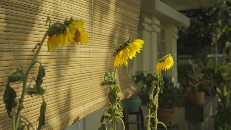 Rumah+dan+Bunga+Matahari