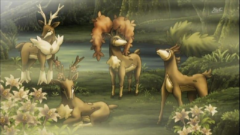 The Four Seasons of Sawsbuck!