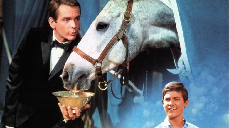 Il+cavallo+in+doppiopetto