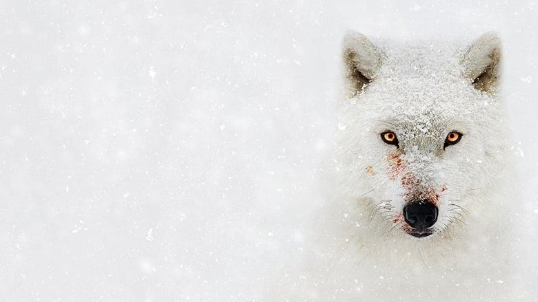 Bear+Grylls%3A+la+legge+del+pi%C3%B9+forte
