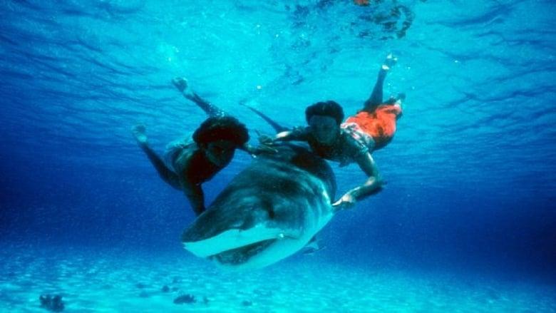 Regarder Film Beyond the Reef Gratuit en français