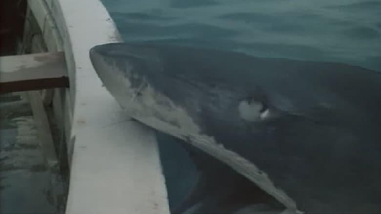 Night of the Sharks nederlandse ondertiteling