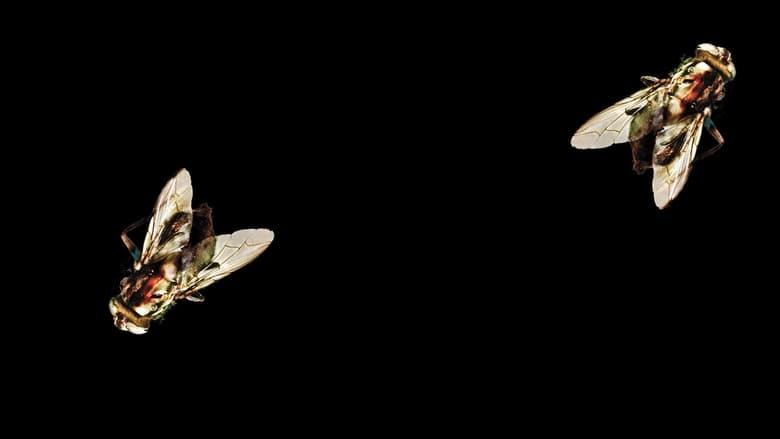 La+mosca+2