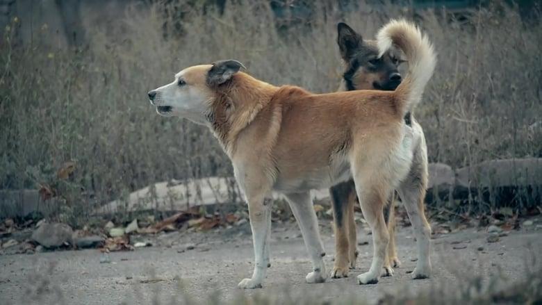 72 Dangerous Animals: Latin America Sezonul 1 Episodul 5 Online Subtitrat FSonline