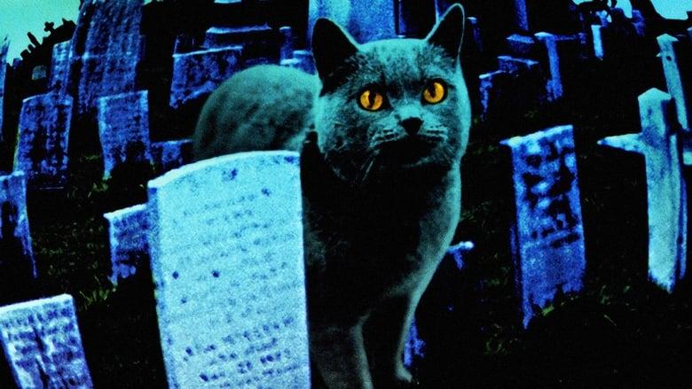 Cimitero+vivente