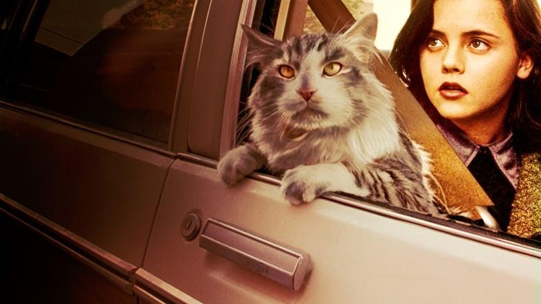 Operazione+gatto