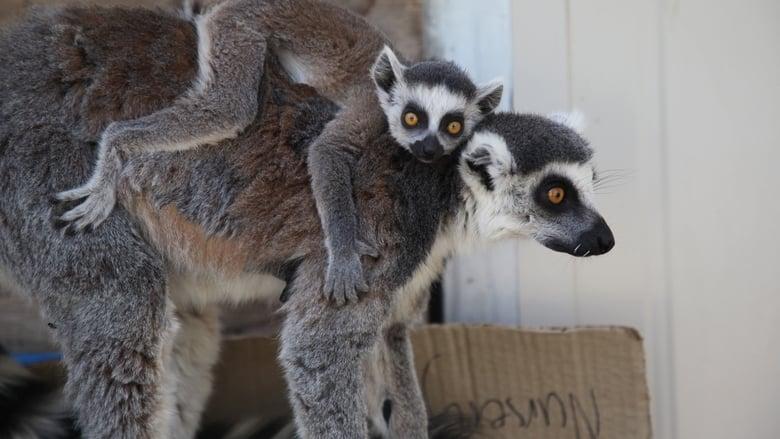 مشاهدة مسلسل Secrets of the Zoo: Down Under مترجم أون لاين بجودة عالية
