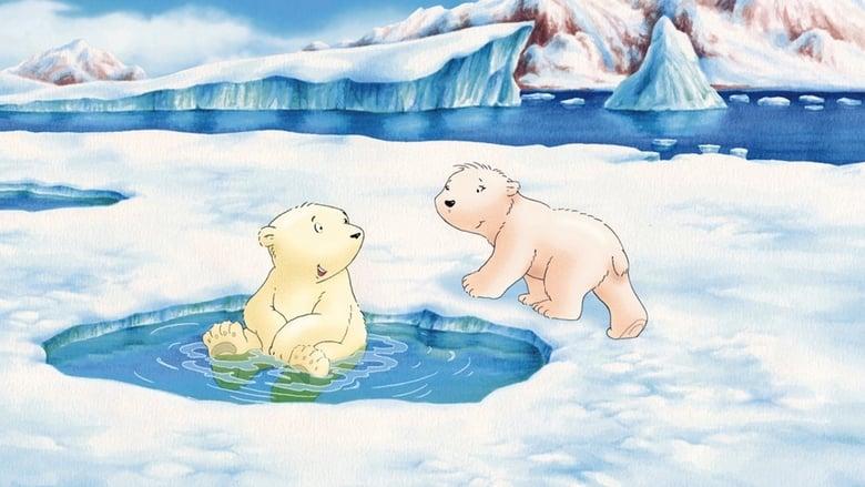 Piuma+il+piccolo+orsetto+polare