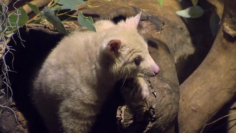 72 Cutest Animals Sezonul 1 Episodul 6 Online Subtitrat FSonline