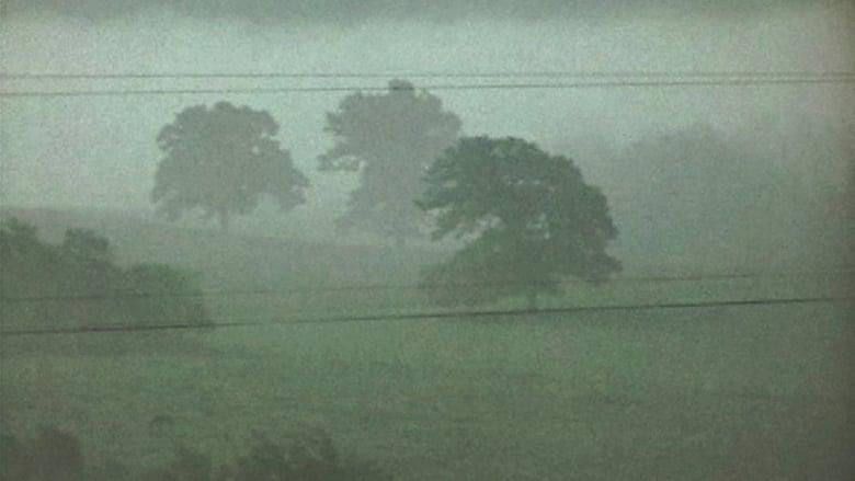 Fog+Line