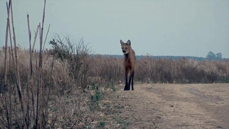 72 Dangerous Animals: Latin America Sezonul 1 Episodul 11 Online Subtitrat FSonline
