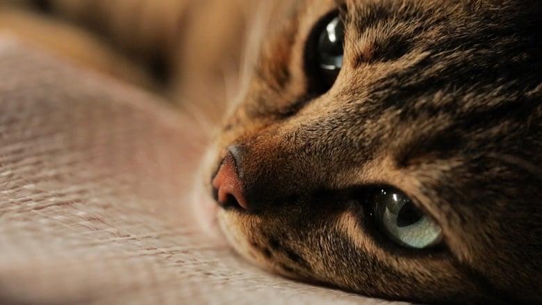 Imagens do Gatos Dublado Online