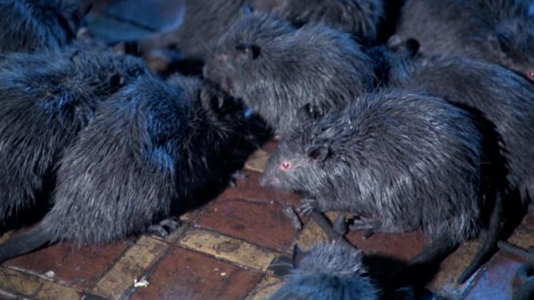 Rats+-+Notte+di+terrore