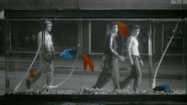 кадр из фильма Бойцовая рыбка