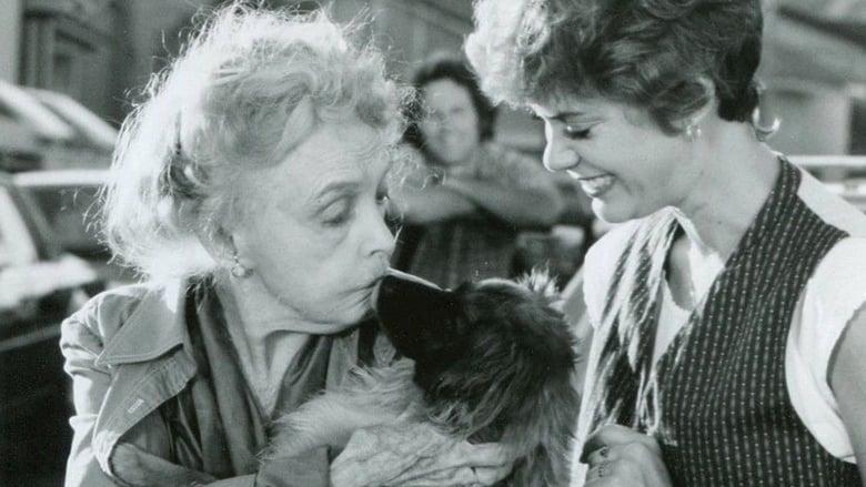 Hambone and Hillie (1983) — The Movie Database (TMDb)